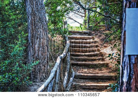 Stairway In A Pinewood In Platamona