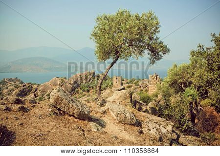 Lonely Olive Tree Grown On Hill With Historical Ruins Of Byzantine Town, Turkey