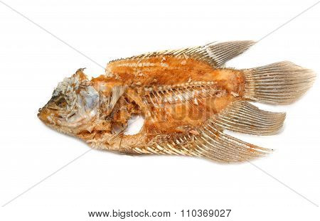 Fish Bone Isolated On White Background