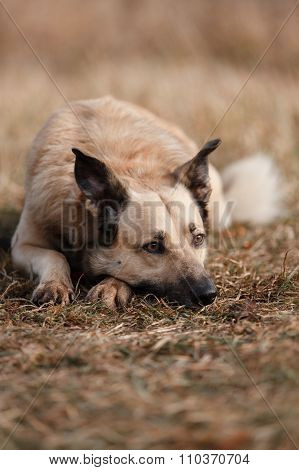 Mixed Breed Dog Walking In Park