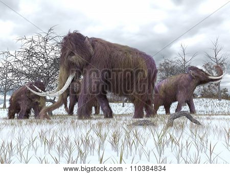 Woolly Mammoths Grazing