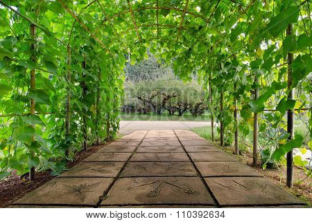 Tree arch walking path in national garden of Chiangmai city Thailand
