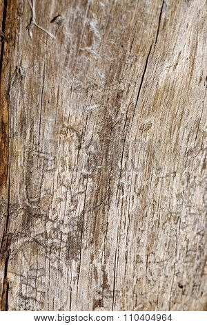 Pine Board Background.