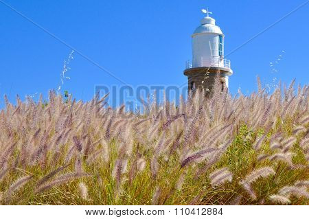 Woodman Point Lighthouse in a Field of Purple Grasses