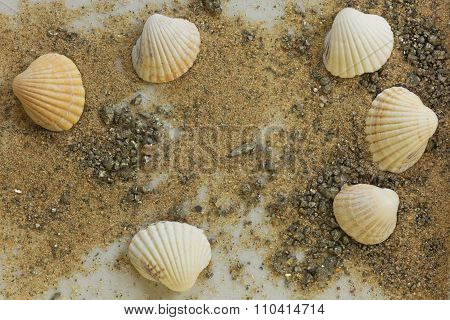 Sand With Shells And Fool's Gold