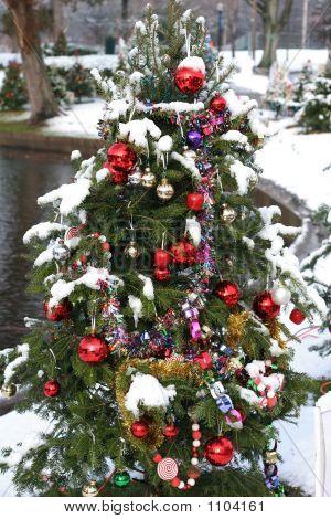 Christmas Trees 004