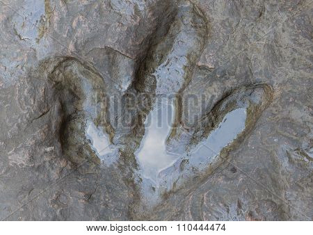Detail of dinosaur tracks in Thailand