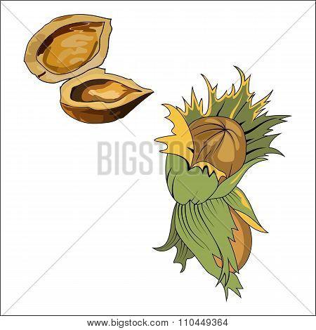 Hazelnut With Wild Forest Tree