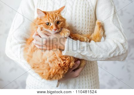 Woman In Knitted Sweater Holding Scared Ginger Cat. Pet Hiding In The Arms Of It's Mistress.
