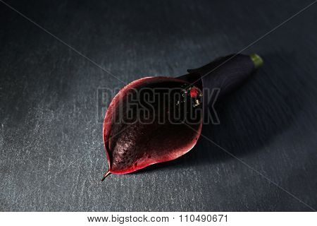 Black Calla Lilly, on grey background