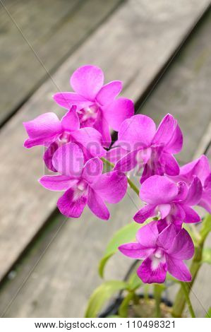 violet orchid flower in garden