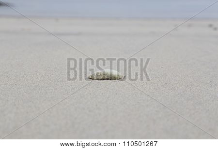 Lonely at the beach