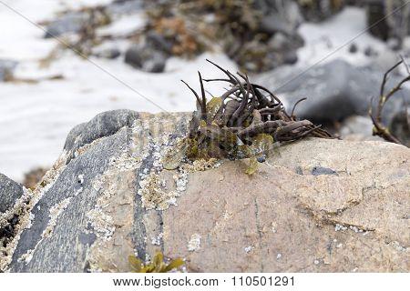 Algea on a rock