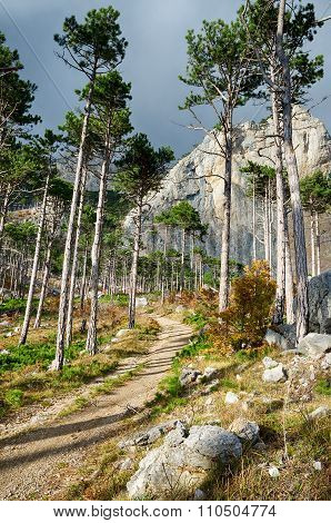 Path Among The Tall Pines And Rocks