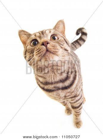 Sweet funny kitten