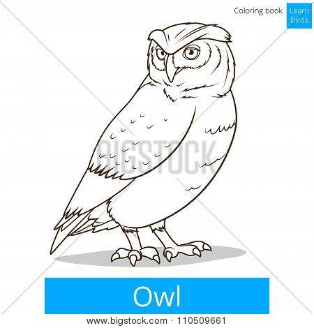 Owl bird learn birds coloring book vector