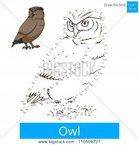 Owl bird learn to draw vector