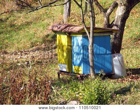 Hive bee