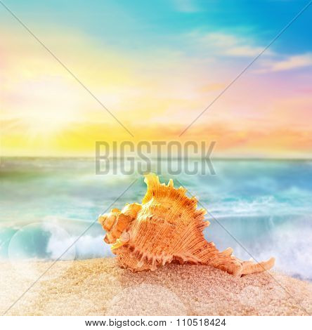 Sea Shell With Thorns On Sea Background