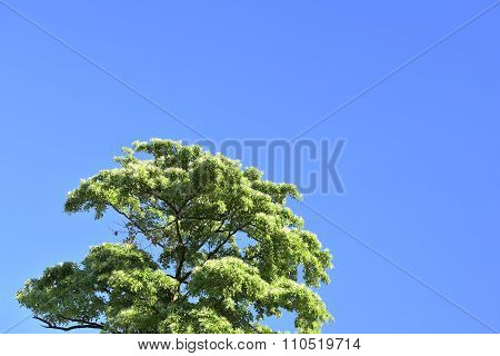 A tree in the blue sky