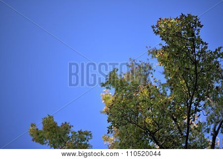 Blue sky with autumn tree