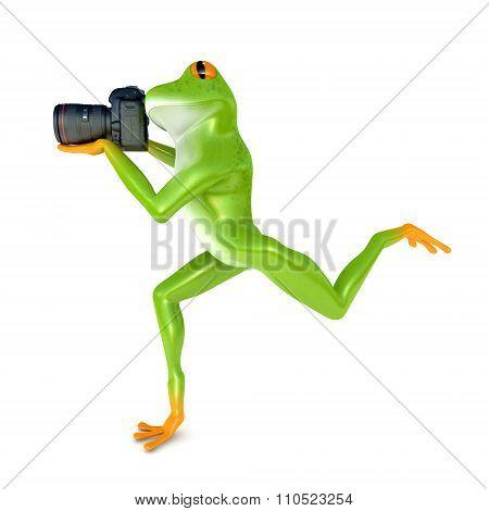 Rain frog photographs