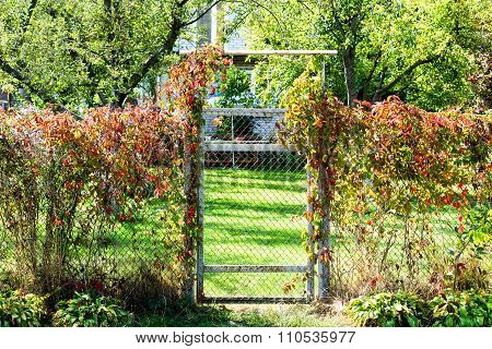 Metal Mesh Fence With A Wicket Overgrown With Bushes