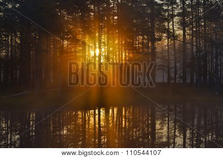 Rising Sun Behind The Trees