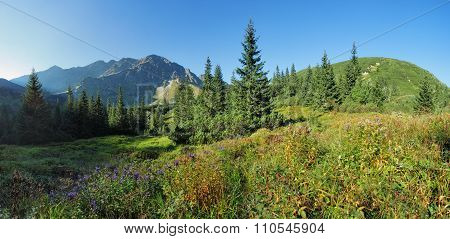 Wild Flower In Green Forest Mountain, Tatras, Slovakia