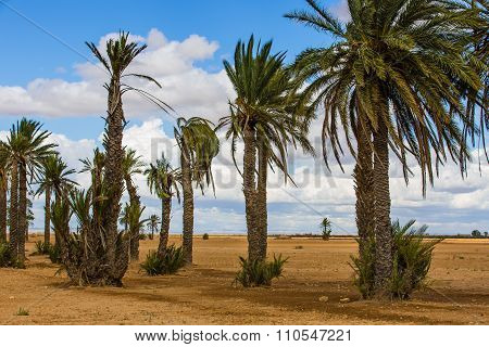Palm Trees In The Ground Around Marrakesh