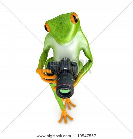 Tropical  frog photographs