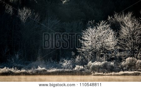 Morning sun dawns on ice and frost covered wetland trees and foliage.