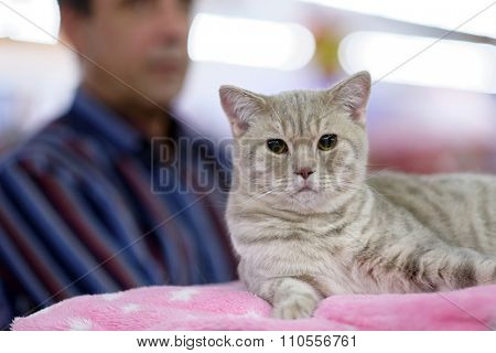 ST. PETERSBURG, RUSSIA - OCTOBER 11, 2015: Owner with his cat during World Catt Show in the mall Piterland. The show was held by the World Cat Federation rules. Focus on the cat