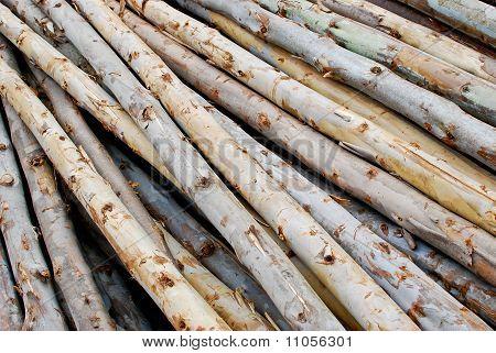 Pile Of Wood In Logs Storage