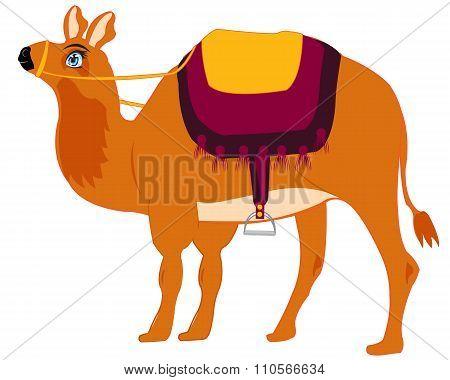 Animal camel with saddle