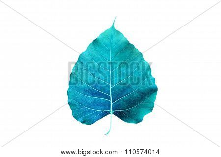 abstract colorful blue leaf, isolated on white background