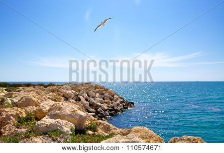 Indian Ocean: Sea Gull Soaring