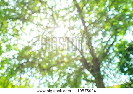 Blurred green Bokeh natural tree in parks with bight sunlight effect
