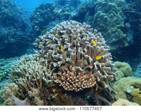 Stone coral, Island Bali, Pemuteran