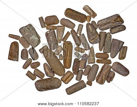 Big pile of fossilized belemnite rostrums