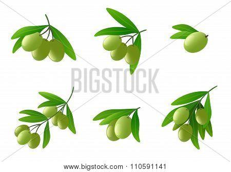 Green olives on branch vector set