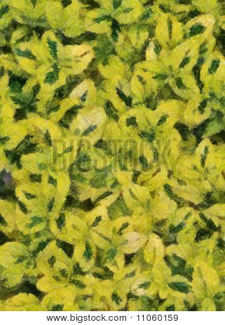 Variegated Carmel Creeper Fuzzy Background (oil Painting - Monet)