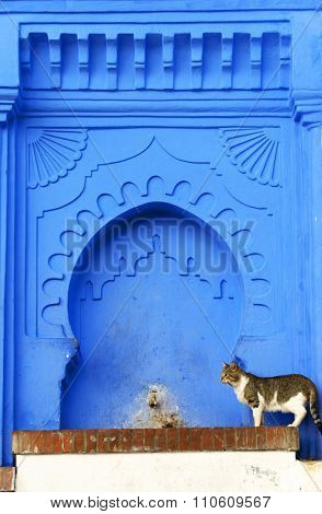 Cat in the Old Medina of Chefchaouen, Morocco