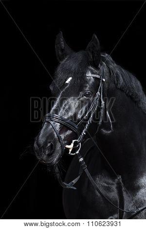 black horse on black background