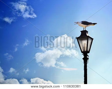 seagull screaming on the lamp