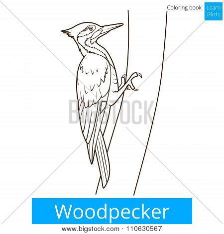 Woodpecker bird learn birds coloring book vector