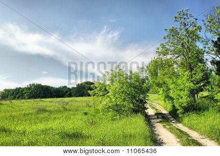 Walkway On A Summer Meadow