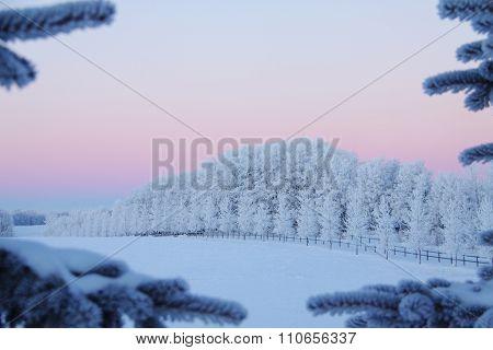 Hoar frost tree line