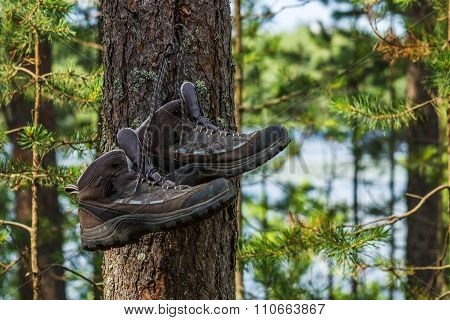 Hiking Boots Hanging On A Tree In The Forest