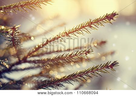 Background With Fir-tree Branches